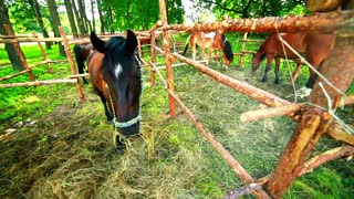 Horse eating hay. Horse feeding. Young horse eat grass. Horse ranch. Mare grazing. Horses at horse farm. Three horses behind fence at ranch. Young horses on pasture