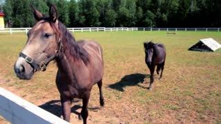 Horse looking at camera. Horse head closeup. Fly on horse head. Young horses at horse farm. Horse face. Horse muzzle close up. Domestic animal at farm