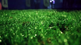 Lawn at night. Closeup of green grass Close up. Grass background. Trimmed grass on meadow at night. Green grass soccer field. Panning on grass field at park. Macro shot of lawn grass at night