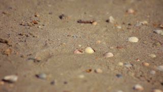 Little sea shells and stones on sand. Beach sand with sea shells. Close up of small sea shells on sand on beach. Sea coast closeup. Sand background. Seashells on sand. Small stones on sand. River shore