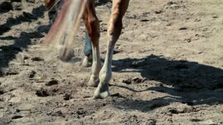 Closeup of horse hooves and legs walking on field