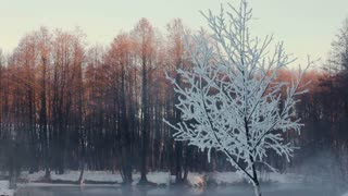 Misty morning in winter forest. Snow covered trees in forest. Snow on frozen tree branches. Panorama of winter forest. Winter forest landscape. Mist over winter river. Cold weather. Winter season