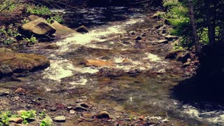 Mountain stream. Water stream flowing in forest. River in forest in summer. Water flowing over stones at sunlight