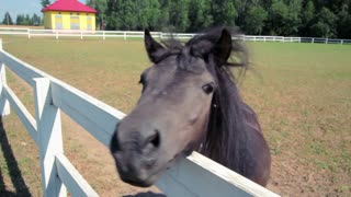 Young horse looking at camera. Small horse head closeup. Fly on pony head. Pony at horse farm. Small horse face. Horse muzzle close up. Funny pony behind fence. Domestic animal at farm.