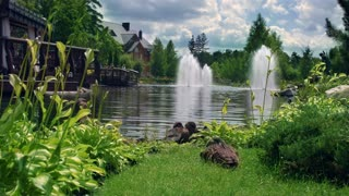 Nature park. Ducks family in beautiful nature park. Nature landscape. Clouds sky over villa in green garden. Water fountains in lake near house in garden. Fountain on lake in green summer park