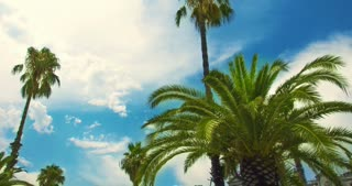 Palm tree on blue sky and white clouds. Timelapse of tropical tree on clouds background. Closeup. Green palm leaves on blue sky with clouds. Time lapse of palmtree on tropical beach