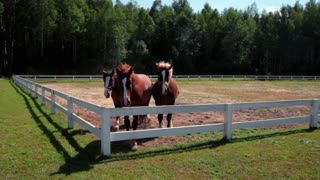 Three horses at horse farm. Three horses looking over fence at horse ranch. Group of young horses on pasture. Race horses galloping outdoor. Purebred horses running at ranch