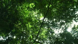 Sun rays shine through tree branches at summer. Green leaves background. Green tree bottom view. Trees with leaves and sun beams. Nature background. Sunlight shining through green leaves