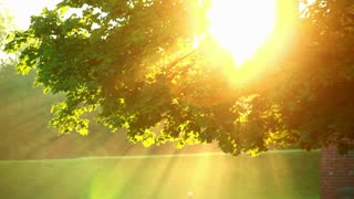 Sunlight through tree in morning. Sun beams through tree. Closeup of sun glare in the tree foliage. Golden sun light in green tree leaves in summer. Sun beams in tree. Sun shining. Tree at morning sunrise