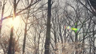 Sunlight in winter forest. Sun shine through tree branches covered with snow. Panorama from sun to trees and snow. Sun rays in winter forest. Snow covered tree. Sun beams through winter tree