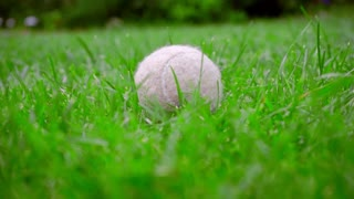 Tennins ball on grass. Closeup of dog toy on green lawn. Close up of white tennis ball at green grass. Old ball on backyard. Dog toy outside