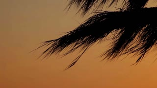 Tropical beach sunset with coconut palm tree leaves silhouettes. Closeup palm tree leaves at sunrise. Palm tree at sunset. Sun shinning through palm leaves. Tropical background. Sunlight through palm
