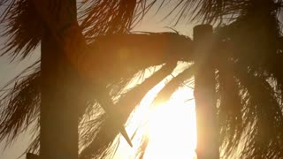Tropical beach sunset with coconut palm tree silhouettes. Closeup palm tree leaves at sunrise. Palm tree at sunset. Orange tropical background. Sunset background. Sunlight through palm