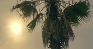 Tropical palm tree at sunset. Timelapse of sunset with tropical palm tree. Sun set on tropical beach. Summer travel. Tropical vacation. Palm tree leaves sways at sunset sky. Tropical plant in evening