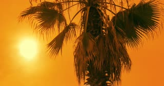 Tropical sunset. Palm tree at sunset sky. Timelapse of palm tree at sunset. Sun sets on tropical beach. Silhouette of palm leaves against golden sky. Hot weather. Summer vacations