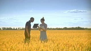 Agro researchers team working in wheat field. Female and male agronomist analyzing wheat ears with laptop computer. Agriculture research concept