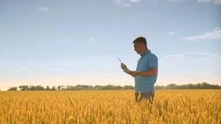 Agronomist working in field. Man with tablet analyzing wheat stalk. Summer harvest land. Agriculture technology. Agriculture scientist looking wheat ears