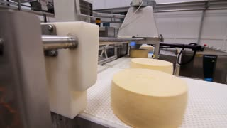Automatical process of cheese production line. Cheese rounds on conveyor belt. Cheese production factory. Manufacturing process on milk processing factory
