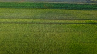 Beautiful landscape grain field in farming land. Aerial agricultural field on summer day. Aerial view colorful barley growing on farming field. Green wheat field landscape