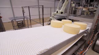 Cheese rounds on conveyor belt. Cheese manufacturing line. Cheese production factory line. Food production process. Milk processing plant