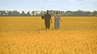 Farmers walking in wheat field. Agricultural workers going away in beautiful yellow field. Back view of agro researchers walk in field at summer