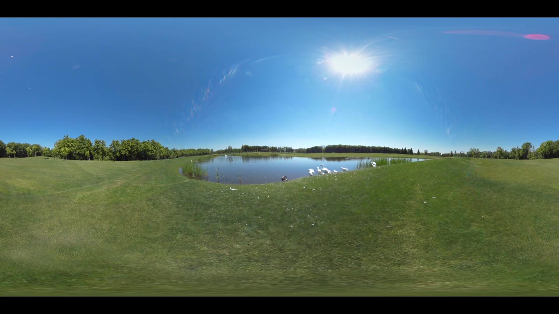 Green grass lake panoramic view. White swan on lake shore 360 degree panorama. Pond grass field panorama 360 view. Beautiful nature lake swan. Pond grass landscape