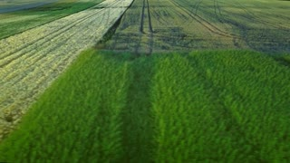 Harvest field aerial landscape. Wheel trace agriculture field. Wheat field landscape. Drone view grain growing on rural field. Colorful farming land landscape