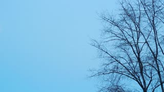 Horizontal panoramic view of winter nature. Tree without leaves over blue sky. Moon on the sky. Winter nature concept. Moon passing the sky