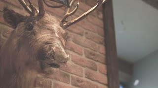 Hunter trophy. Stuffed animal. Deer head on wall. Close up of stuffed deer brick wall. Stuffed deer head. Whitetail deer buck. Loft style. Antlers. Scarecrow. Elk head