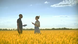 Male farmer and female agronomist analyzing wheat ears. Agriculture researchers working in wheat field. Agriculture engineering research