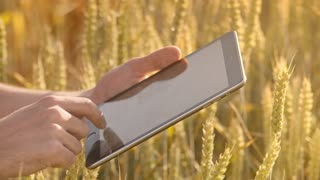 Male hand touch tablet computer in wheat ears. Farmer using modern technology in wheat field. Scientist working with tablet pc in field. Smart agriculture technology