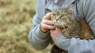 Man stroking cat cute on head. Man holding happy cat in his arms. Man and domestic pet cat. Close up man fondling cat pet. Domestic pet in hands owner