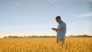 Man with wheat stalk and tablet. Agro scientist using tablet in field wheat. Agriculture science. Man on agricultural land. Biologist working in wheat field