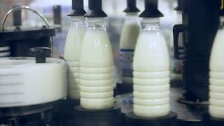 Milk packaging line. Bottle label at dairy factory. Labeling machine at milk factory conveyor belt. Dairy packaging. Milk package. Dairy products label. Food industry. Milk packing. Dairy plant