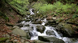 Mountain stream in mountain forest. Water stream quickly flowing downhill. Creek flowing around mossy green stones. Fresh waterfall in rocky path among trees. Wild water stream
