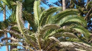 Palm tree with large green leaves. Beautiful palm trees against blue sky. Palm trees on tropical coast. Big green branches
