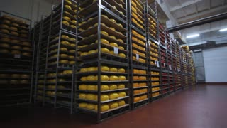 Panoramic view of cheese storage at food factory. Dairy factory warehouse. Cheese rounds on steel racks. Cheese aging process. Food production