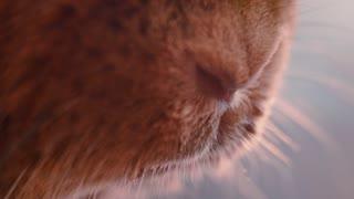 Rabbit nose sniffing. Closeup of brown rabbit mouth. Rabbit nose macro shot. Close up of rabbit snout. Brown bunny nose