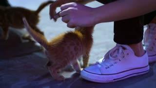 Red kitten walking near female feet. Girl stroking beautiful homeless kitten. Human care for animals. Homeless cat with human leg on street. Red kitten asking food. Homeless kitten