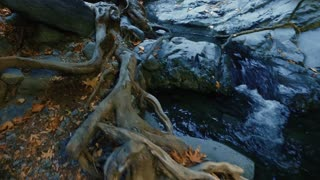 River stream running over tree roots and rocks. Pure fresh water waterfall in nature reserve. Mountain cascade stream with crystal clear water in autumn forest. Close up of cold spring water flowing