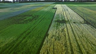 Rural landscape agriculture farming. Rural field aerial view. Sky view agricultural field background. Wheat field landscape. Beautiful view green harvest field