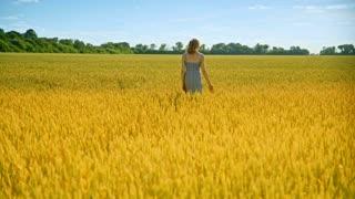 Walking woman touch wheat ears. Blondy girl go away in gold field landscape. Nature beauty woman. Rich summer harvest