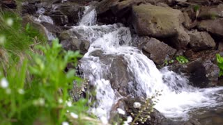 Water stream flow quickly downhill creating beautiful white foam. Close-up of green plants and flowers growing near mountain waterfall. Water falling landscape