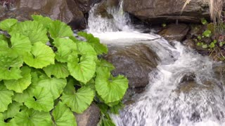 Water stream inside canyon and green platanus leaves. Flowing water in mountains with green plants growing nearby. Green leaves on rock near waterfall