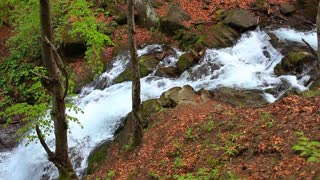 Waterfall falling among stones at autumn. Forest river flowing in mountainous area. Landscape with mountain forest and river stream. Beautiful scenery. Forest waterfall in mountains