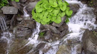 Wild river stream. Stone water splash. Green bush grow on stones in waterfall. Clear stream water flow between dark stones. River falling on rock