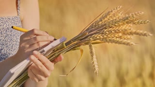 Woman farmer analyzing wheat harvest in field. Female hand hold wheat stalk and writing notes. Agriculture scientist working with wheat ears. Agro business research