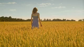 Woman hand touching wheat field. Woman walking away in field wheat. Agriculture land. Alone woman in harvest field. Loneliness in nature