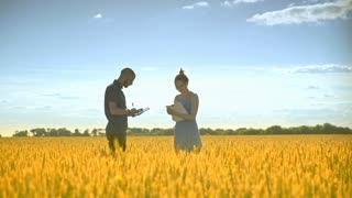 Young man with tablet speaking about wheat harvest with female agronom. Agriculture research. Agro farmer researchers in golden wheat field