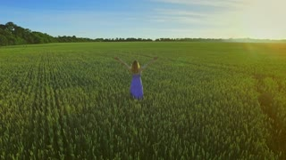 Young woman standing in summer green field. Sky view woman standing in green field with hands up. Happy woman with raised hands on field. Summer walking in wheat field. Nature balance. Harmony concept